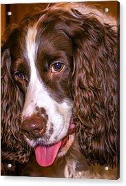 English Springer Spaniel - Paint Acrylic Print by Steve Harrington