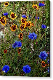 English Cottage Garden Flowers 4 Acrylic Print