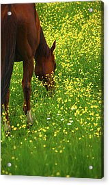 Acrylic Print featuring the photograph Enjoying The Wildflowers by Karol Livote