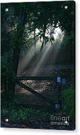 Acrylic Print featuring the photograph Enlighten by Lori Mellen-Pagliaro
