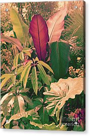 Enlightened Jungle Acrylic Print by Rebecca Harman