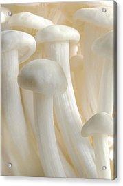 Enoki Forest  Acrylic Print by John Poon