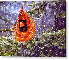 Acrylic Print featuring the photograph Enough Of This White Stuff by Diane Schuster