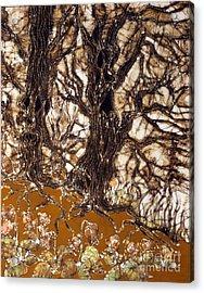 Ent Tree Forest Acrylic Print by Carol Law Conklin