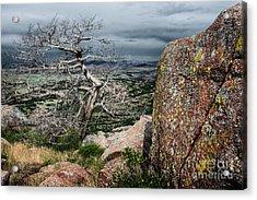 Entangled Tree On Mt. Scott Acrylic Print by Tamyra Ayles