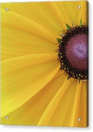 Acrylic Print featuring the photograph Enter Stage Left by David Coblitz
