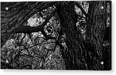 Enter The Woods In Black And White Acrylic Print