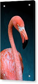 Entirely Unimpressed Flamingo Acrylic Print
