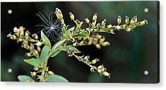 Entrapped Acrylic Print