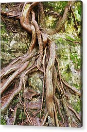 Entwined Acrylic Print by Anna Villarreal Garbis