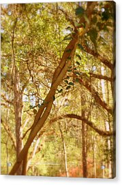 Entwined Acrylic Print