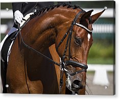 Acrylic Print featuring the photograph Equestrian At Work D4913 by Wes and Dotty Weber