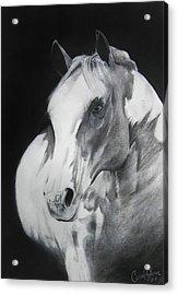 Equestrian Beauty Acrylic Print by Carrie Jackson