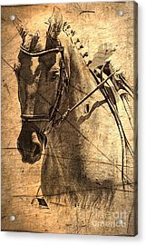 Equestrian Acrylic Print by Clare Bevan