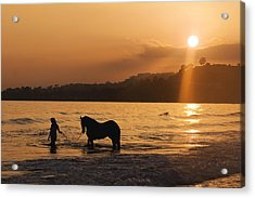 Equine Beach Time Acrylic Print by Nick Sokoloff