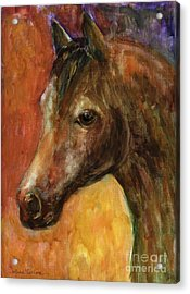 Equine Horse Painting  Acrylic Print by Svetlana Novikova