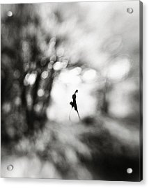 Equinox Acrylic Print by Hengki Lee