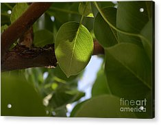 Equipoise In Green Acrylic Print
