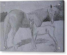 Equus Caballus Acrylic Print by SAIGON De Manila