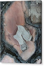 Equus - Tree Bark Art Acrylic Print