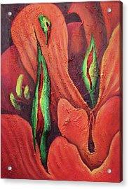Erotocactus Acrylic Print