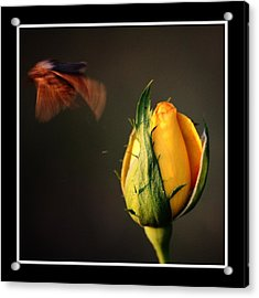 Acrylic Print featuring the photograph Escape by KayeCee Spain