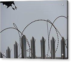Escape To Freedom Acrylic Print