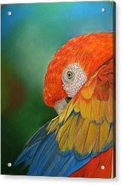 Acrylic Print featuring the painting Escondida by Ceci Watson