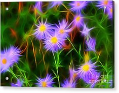 Essence Of Asters Acrylic Print
