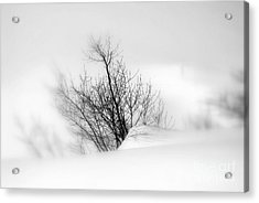 Acrylic Print featuring the photograph Essence Of Winter by Elfriede Fulda