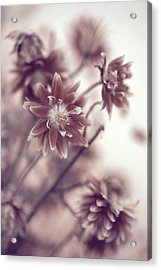 Acrylic Print featuring the photograph Eternal Flower Dreams  by Jenny Rainbow