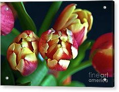 Acrylic Print featuring the photograph Eternal Sound Of Spring by Silva Wischeropp