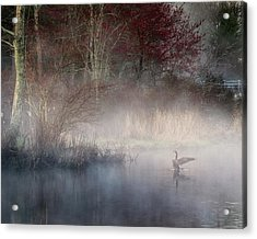 Acrylic Print featuring the photograph Ethereal Goose by Bill Wakeley