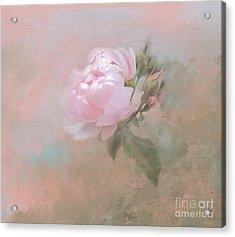 Ethereal Rose Acrylic Print