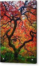 Acrylic Print featuring the photograph Ethereal Tree Alive by Darren White