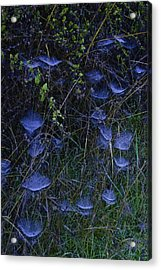Acrylic Print featuring the photograph Ethereal Webs by Sherri Meyer