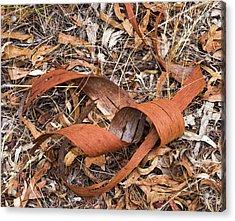 Eucalyptus Bark - Canberra - Australia  Acrylic Print