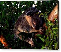 Eucalyptus Daze Acrylic Print by Douglas Kriezel