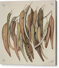 Eucalyptus Leaves Acrylic Print by Jenny Barron