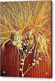 Eucalyptus Red Acrylic Print