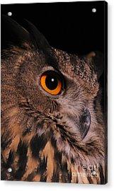 Eurasian Eagle-owl Acrylic Print