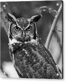Eurasian Eagle Owl Monochrome Acrylic Print