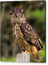 Eurasian Eagle Owl With A Cowboy Hat Acrylic Print by Les Palenik