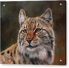 Eurasian Lynx Acrylic Print by David Stribbling