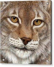 Eurasian Lynx Acrylic Print by Pat Erickson