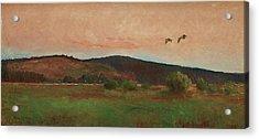 Eurasian Woodcocks Acrylic Print