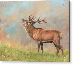 Acrylic Print featuring the painting European Red Deer by David Stribbling