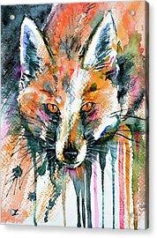 European Red Fox Acrylic Print