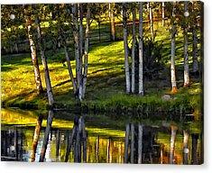 Evening Birches Acrylic Print by Steve Harrington
