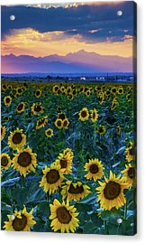 Evening Colors Of Summer Acrylic Print
